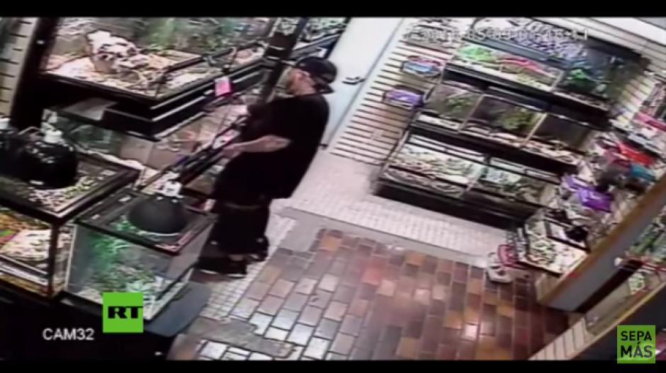 El ladrón ingresa a la tienda y mete la mano dentro del lugar donde está la pitón. (Foto: Youtube)