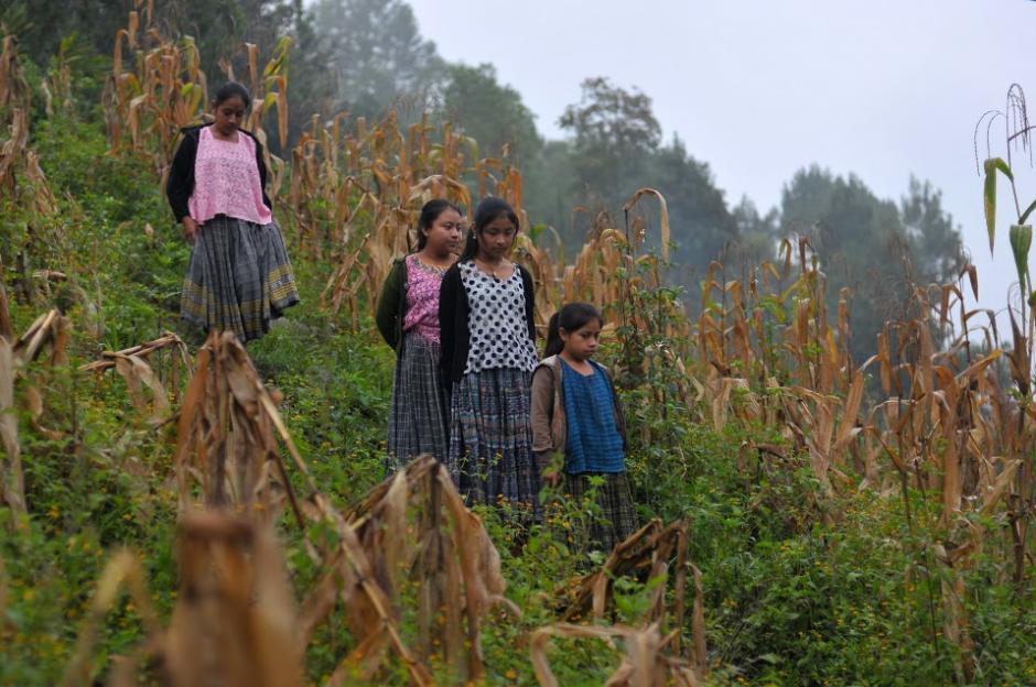 Por pequeñas veredas, entre los maizales, la niñas van presurosas para llegar a la escuela, donde no solo se educan, sino también practican taekwondo. (Foto: Byron de la Cruz/Soy502)