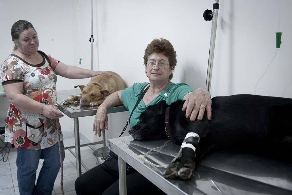 Unos cincuenta veterinarios atenderán una media de quince animales al día