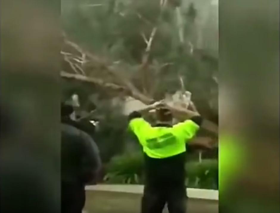 El frustrado leñador se toma la cabeza tras la tragedia que buscaba evitar. (Imagen: captura de YouTube)