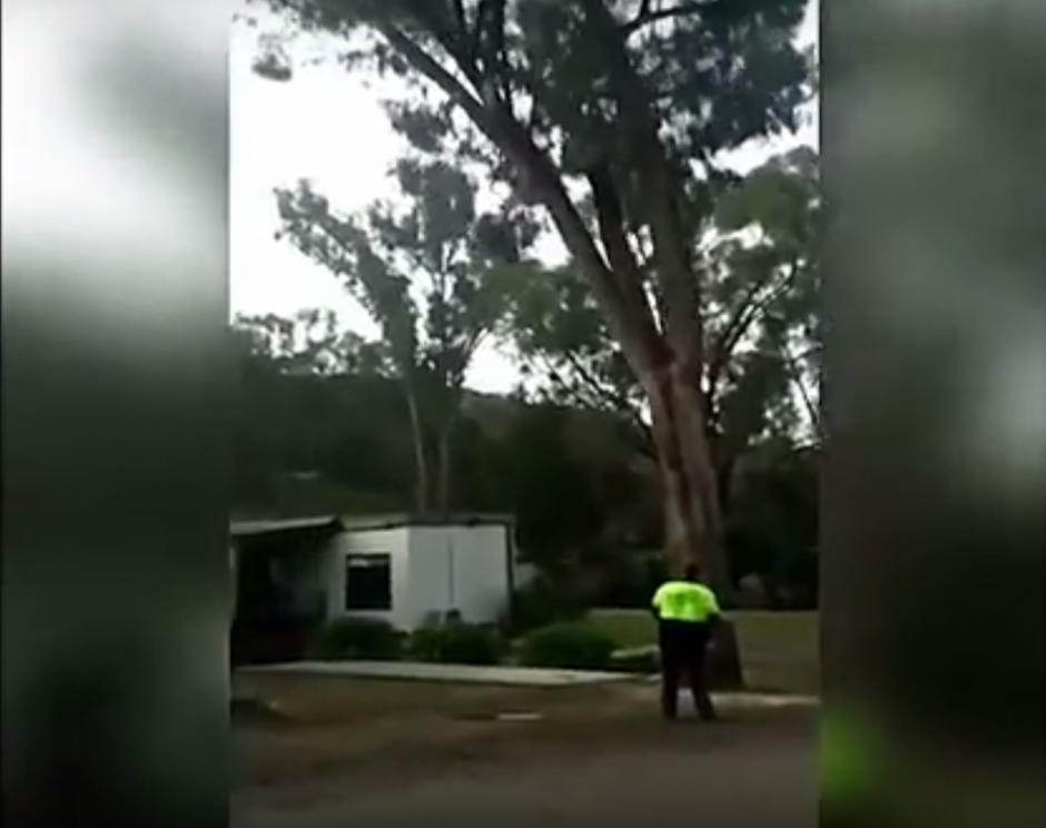 Este es el momento en que el árbol se inclina sobre la vivienda. (Imagen: captura de YouTube)