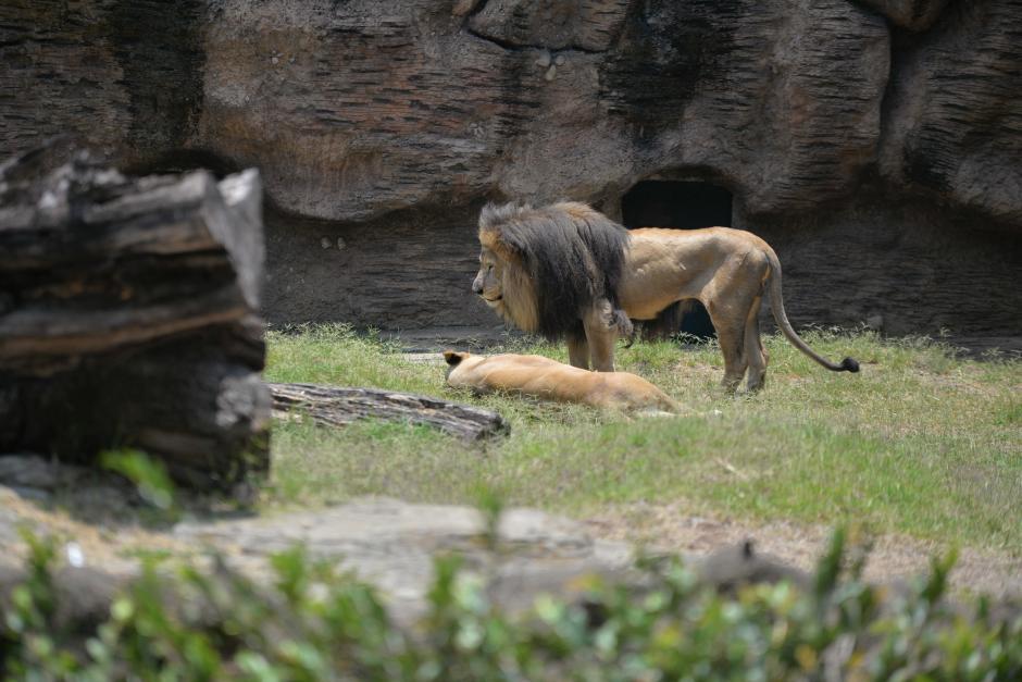 Muchos animales rescatados son encontrados enfermos y maltratados. (Foto: Wilder López/Soy502)