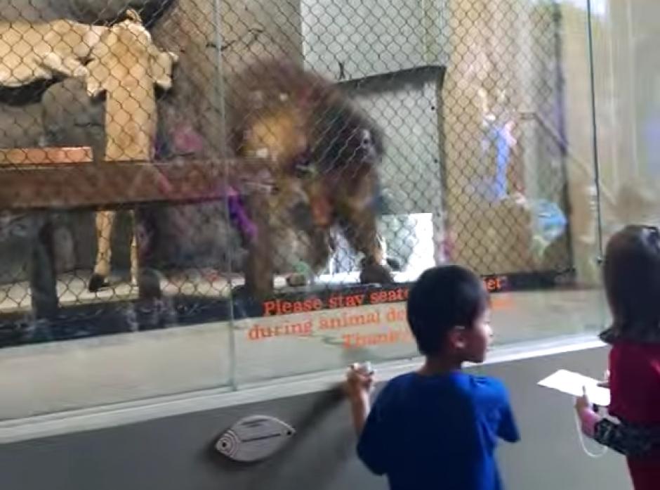 Al ingresar la puerta hidráulica se cierra detrás de el. (Captura de pantalla: Brandon Geer/YouTube)