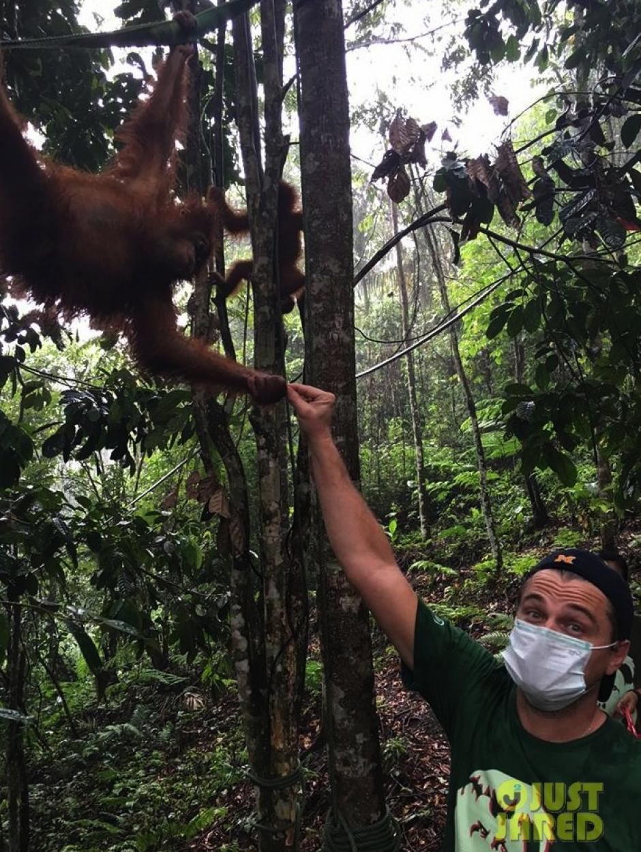 Leonardo compartió su recorrido por el santuario de orangutanes. (Foto: Leonardo Dicaprio)
