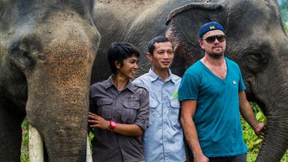 Leonardo también ha luchado por los elefantes de Indonesia. (Foto: dailymail.co.uk)
