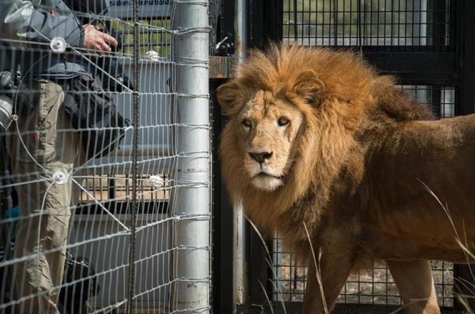 En Perú la ONG debió intervenir en varios circos escoltada por las fuerzas del orden para hacer aplicar la ley de no animales salvajes. (Foto: Facebook)