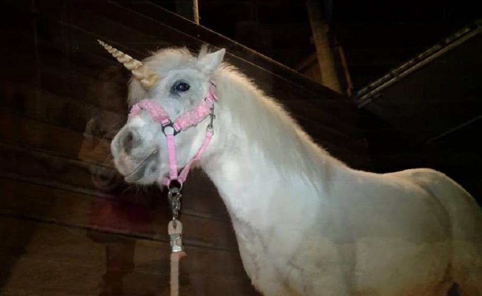El pony se llama Julieta y asustó a quienes lo encontraron en la carretera. (Foto: losandes.com)