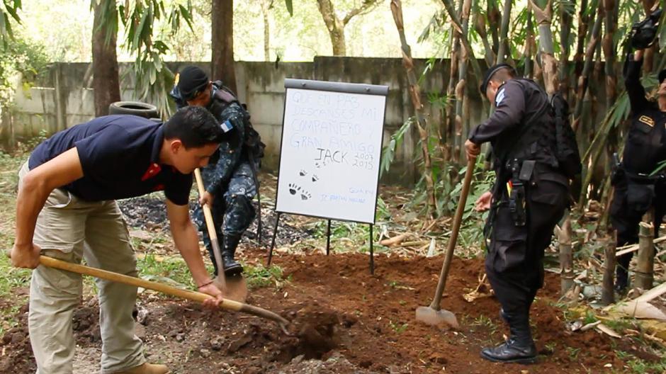El pastor alemán vino a Guatemala en 2007 proveniente de Estados Unidos para participar en la lucha contra el tráfico de drogas.(Foto: Fredy Hernández/Soy502)