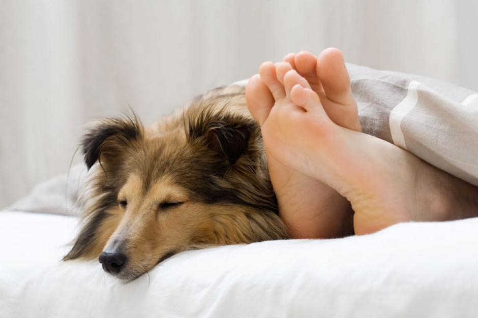 El estudio concluyó que quienes duermen con su mascota se sienten más tranquilos y seguros. (Foto: mascotalia.es)