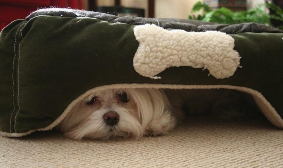 Estos consejos pueden ayudar a que tu perro o gato reduzca su ansiedad ante la pirotecnia. (Foto: Día a Día)