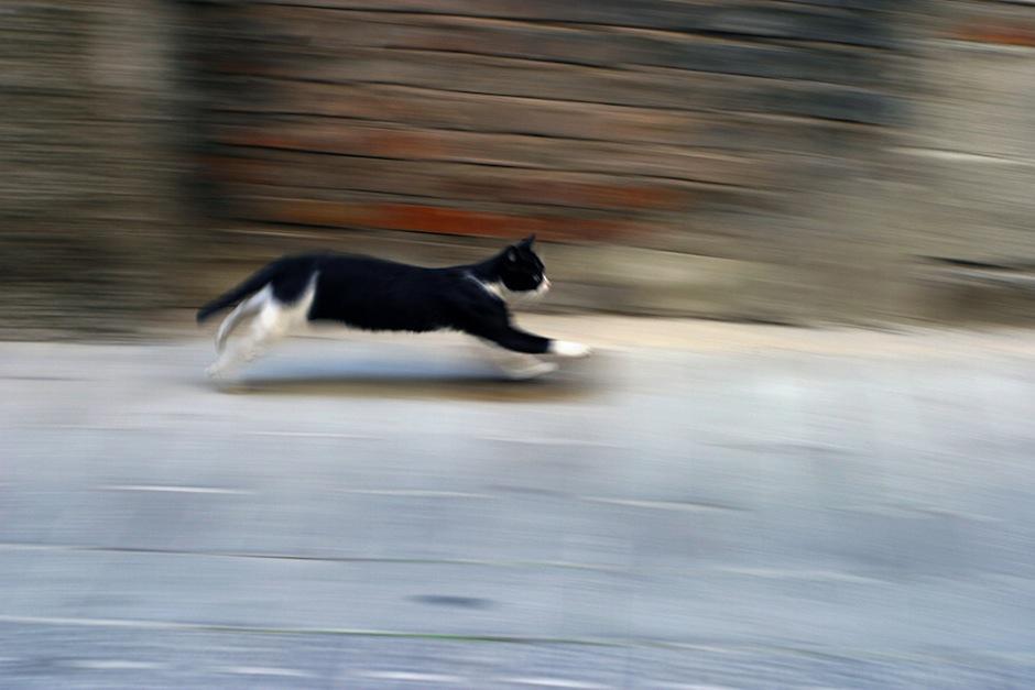 Cierra las puertas y ventanas; los perritos y gatos tienden a huir y desorientarse con el ruido. (Foto: datoscuriososdeanimales)