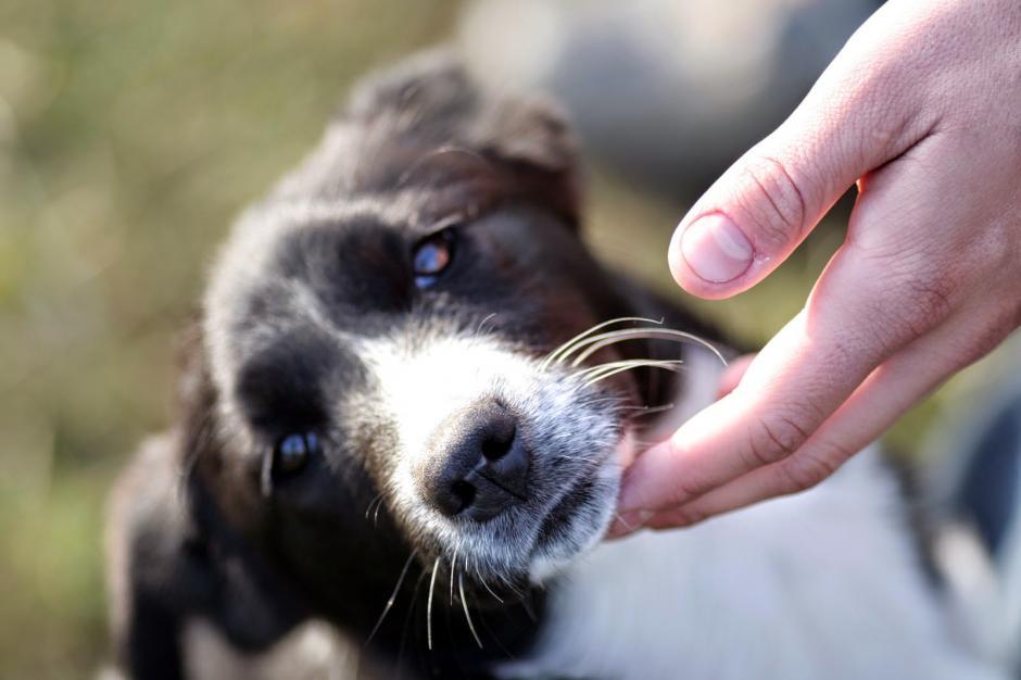 Evita darle caricias en ese momento de tensión, el perrito debe tener su espacio. (Foto: datoscuriososdeanimales)