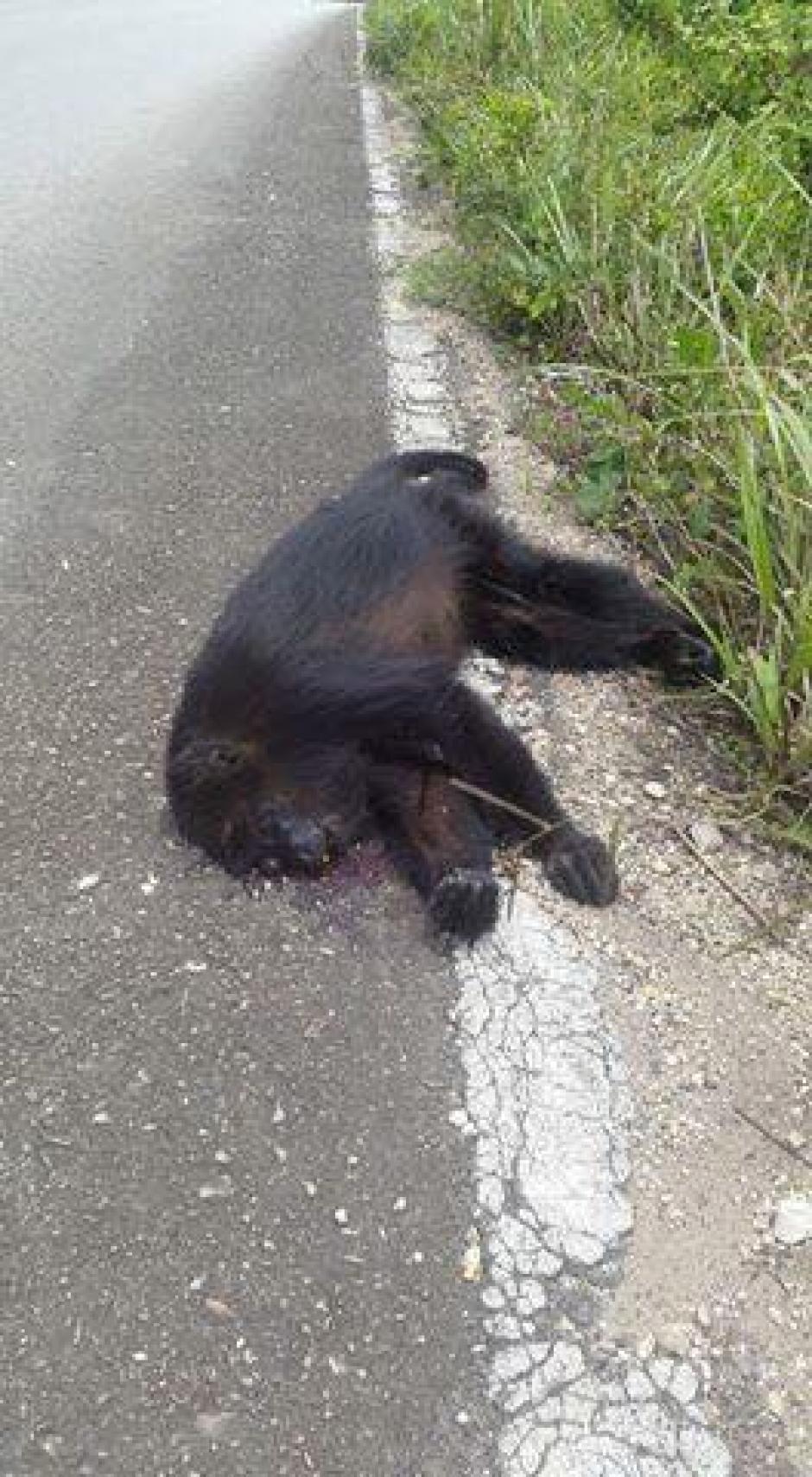 A pesar que los animales intentaron huir las balas se los impidió. (Foto: Facebook, Telenoticias de Petén)
