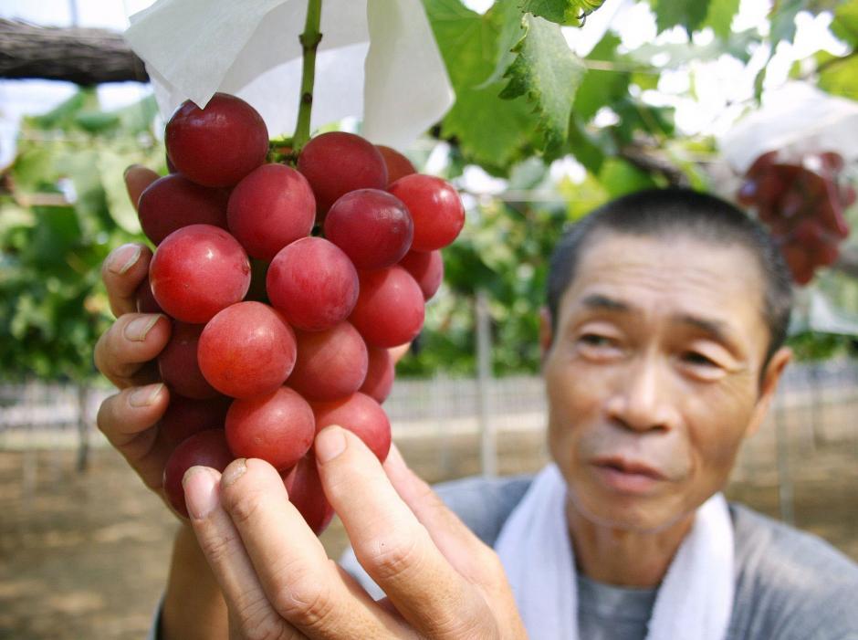 La Ruby roman es considerada la variedad de uva de mesa más cara del mundo. (Foto: El Espectador)