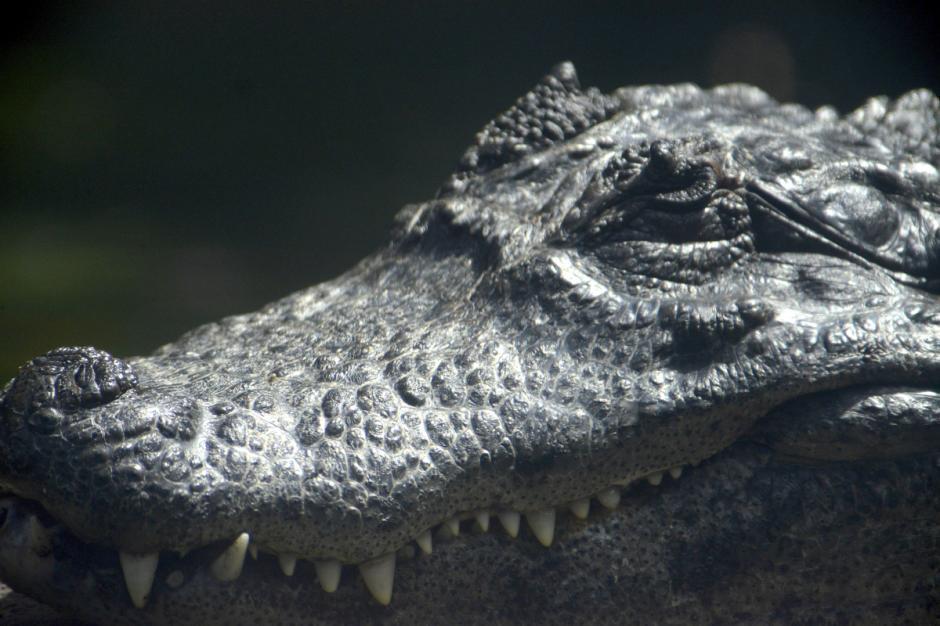 Incluso los reptiles tienen algo que contar en sus ojos. (Foto: Deccio Serrano/Nuestro Diario)