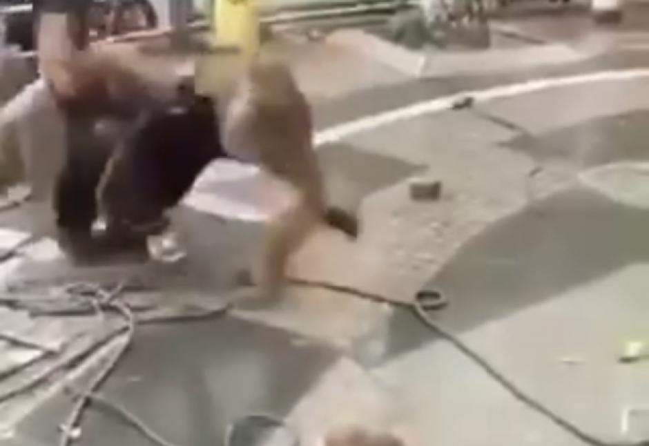 El mono no atiende todas las instrucciones recibidas. (Captura de pantalla: top videos/YouTube)