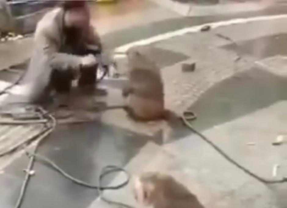 En varios ocasiones el mono golpea en la cara al hombre. (Captura de pantalla: top videos/YouTube)