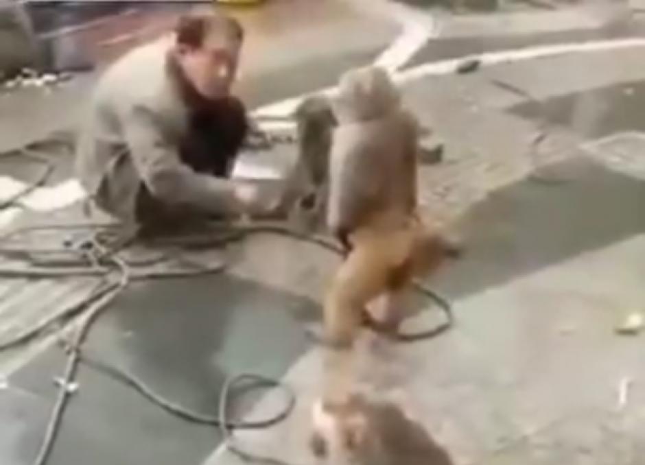 En un descuido otro mono se apodera del cuchillo. (Captura de pantalla: top videos/YouTube)