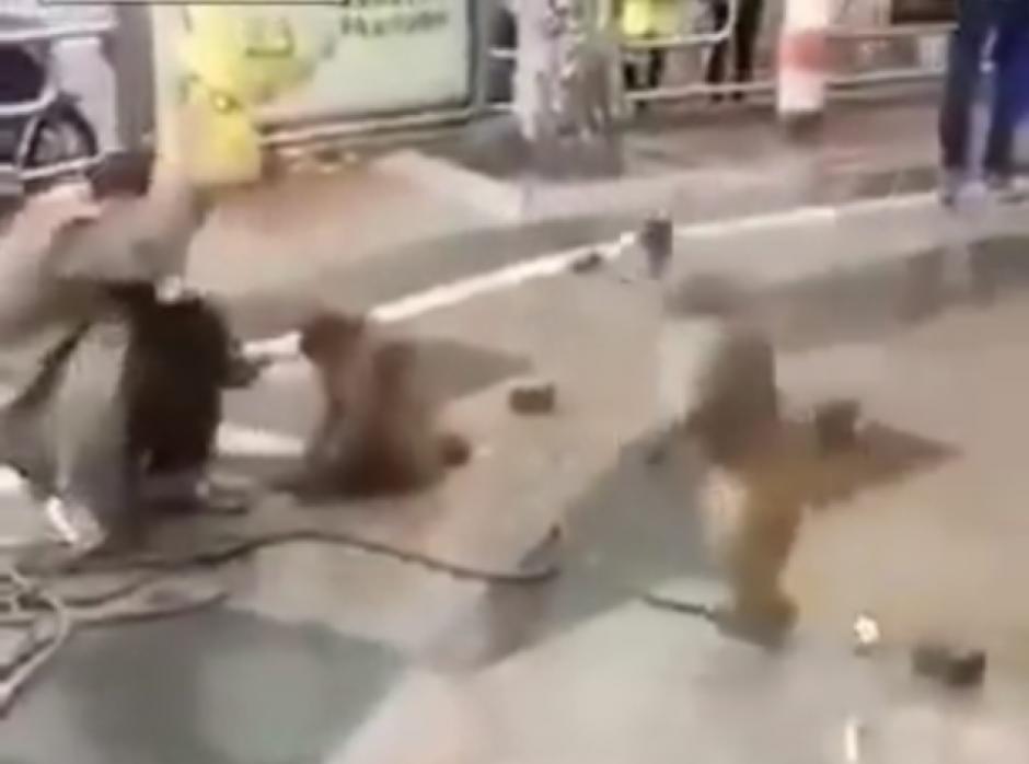 El mono amenaza en varias ocasiones al hombre con el cuchillo. (Captura de pantalla: top videos/YouTube)