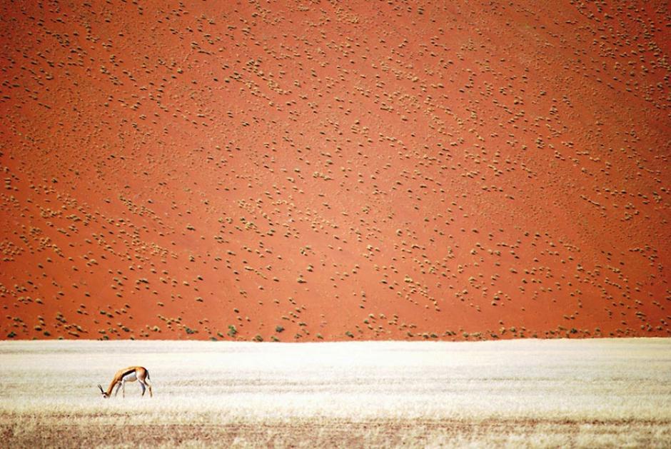 Así lucen las planicies del desierto de Namibia. (Foto: Doris Landertinger/National Geographic)