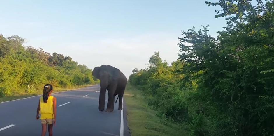 La pequeña se acerca poco a poco a un elefante. (foto: Youtube)