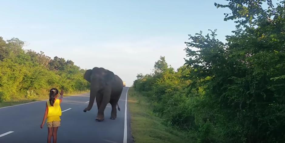 El elefante obedece y da un paso atra´s. (Foto: Youtube)