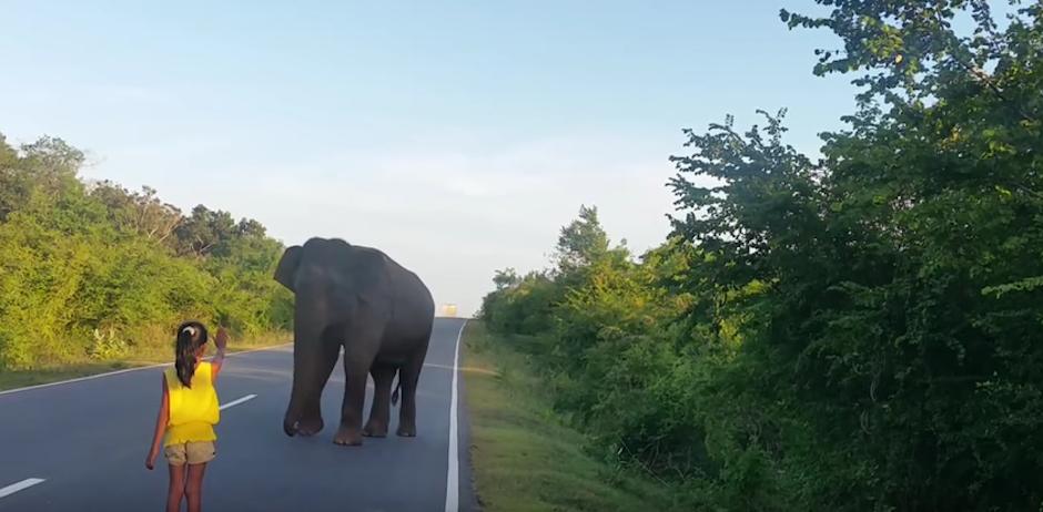 Poco a poco el alefante se aleja. (youtube)