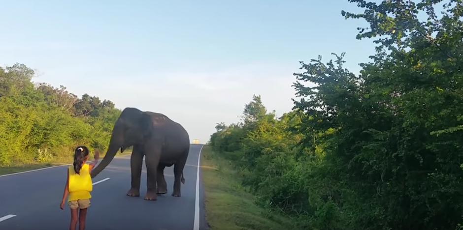 El elefante se voltea. (Foto: Youtube)