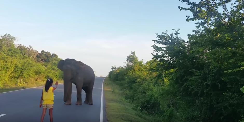 La niña para al animal para evitar que siga caminando en la carretera. (foto: Youtube)