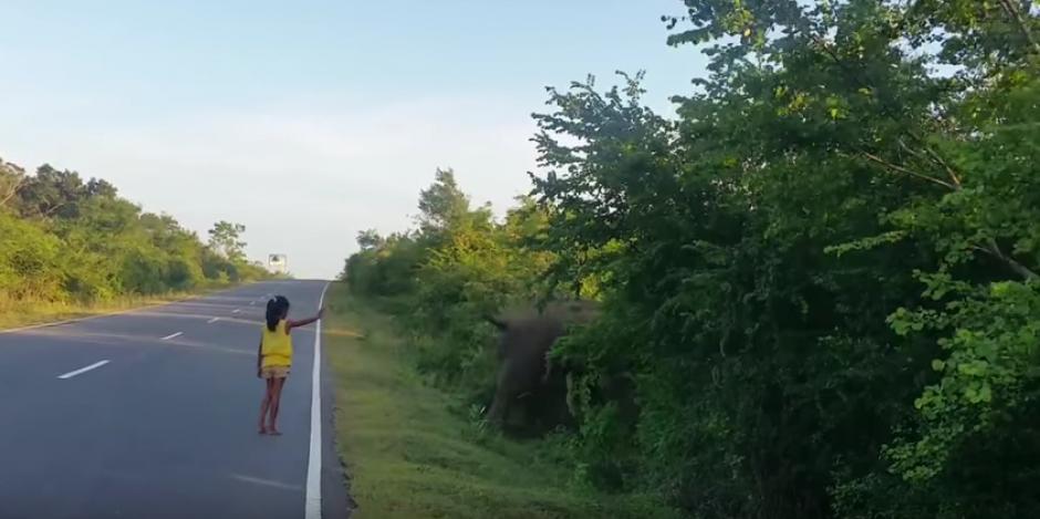 La orden es un éxito, el elefante está a salvo. (Foto: Youtube)