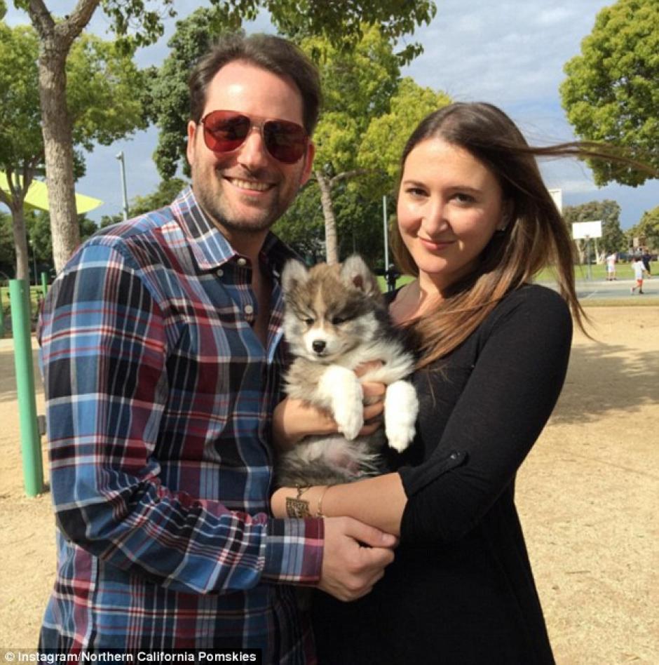Rachel y Matt adoptaron a este adorable perrito. (Foto: NOrthern California Pomskies)