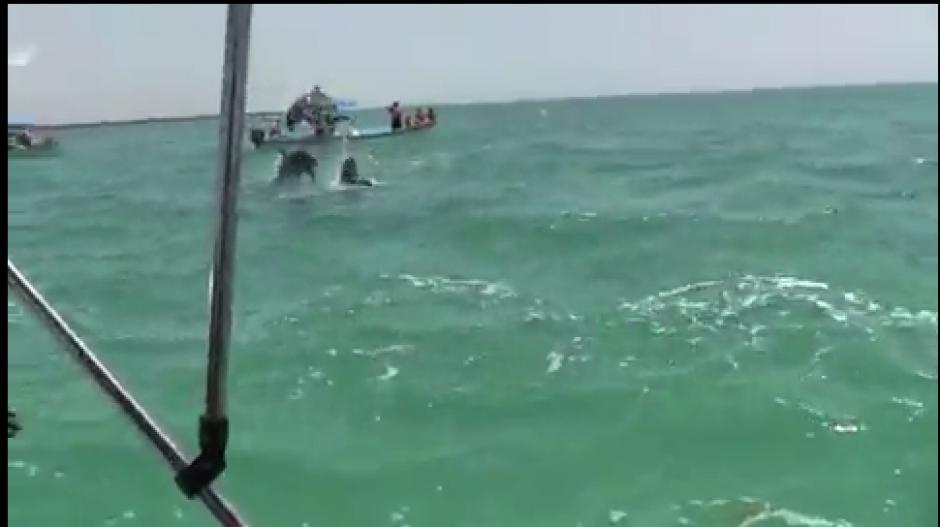 Un grupo de delfines fueron vistos por los turistas en México. (Foto: Video)