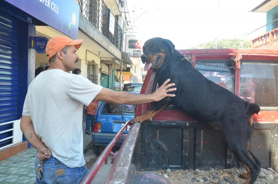 Rocky es le perro raza Rottweiler que atacó a la pequeá Keily. (Foto: José Sánchez/Nuestro Diario)