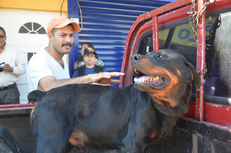 El dueño de Rocky, el perro que será sacrificado también reclama sobre la responsanbilidad de los padres de la niña. (Foto: José Sánchez/Nuestro Diario)