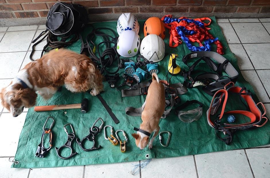 Los perritos rescatadosJack (Cocker Spaniel) y Drake (Chihuahua), integrantes de Pet Rescue Guatemala, nos muestran el equipo que los voluntarios utilizan para salvar vidas. (Foto: Selene Mejía/Soy502)