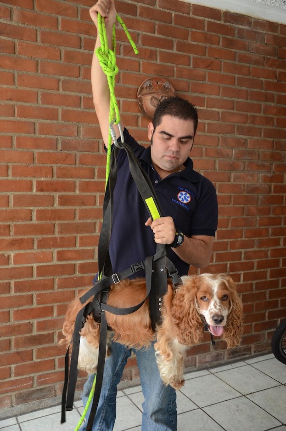 Donald Piedrasanta nos muestra como funcionan los implementos de rescate de mascotas; Jack es un modelo muy educado. (Foto: Selene Mejía/Soy502)