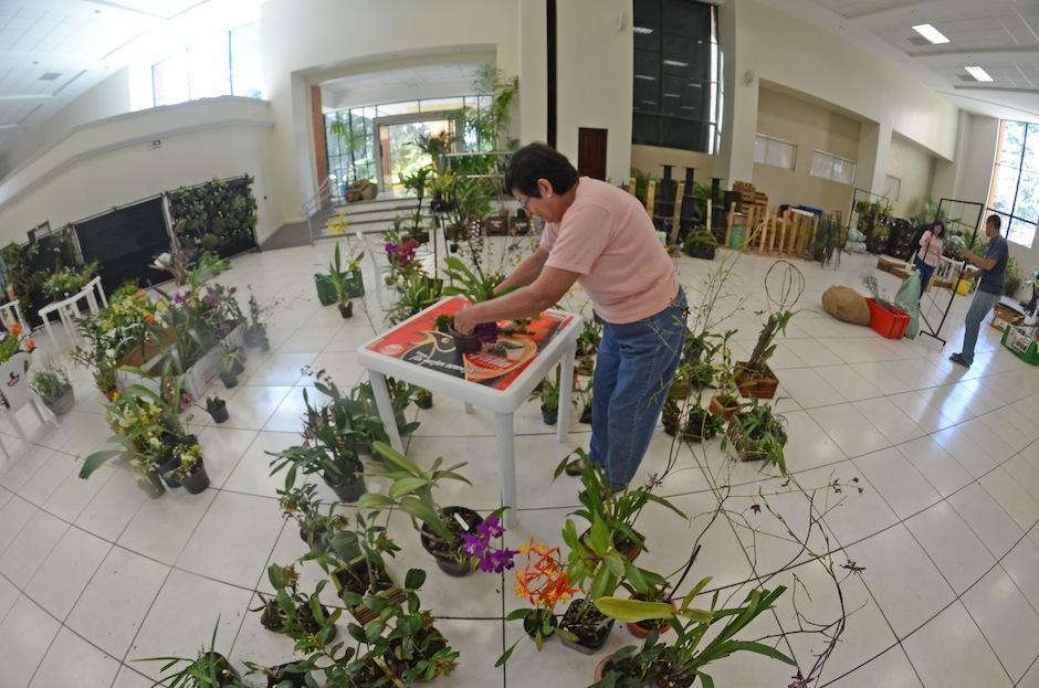 Especialistas en el cultivo artificial y el cuidado de las plantas entregan su tiempo en la conservación de las orquídeas. (Foto: Esteban Biba/Soy502)