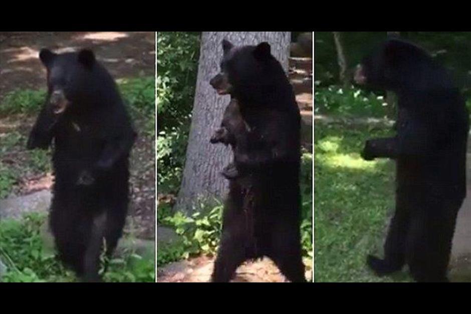 El oso negro apareció en el barrio Oak Ridge de New Jersey. (Foto: captura de video)