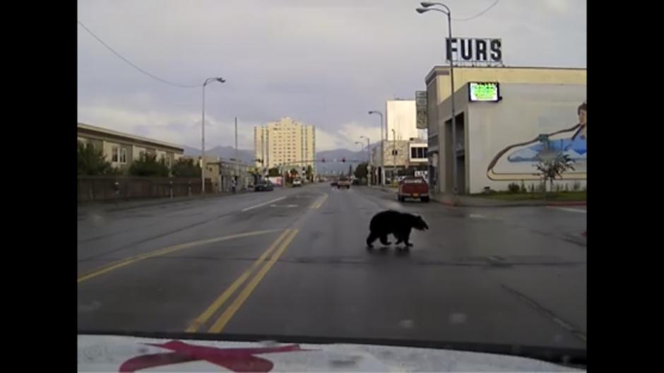 Los ciudadanos de Alaska se alarmaron al ver al oso. (Foto: Captura de YouTube)