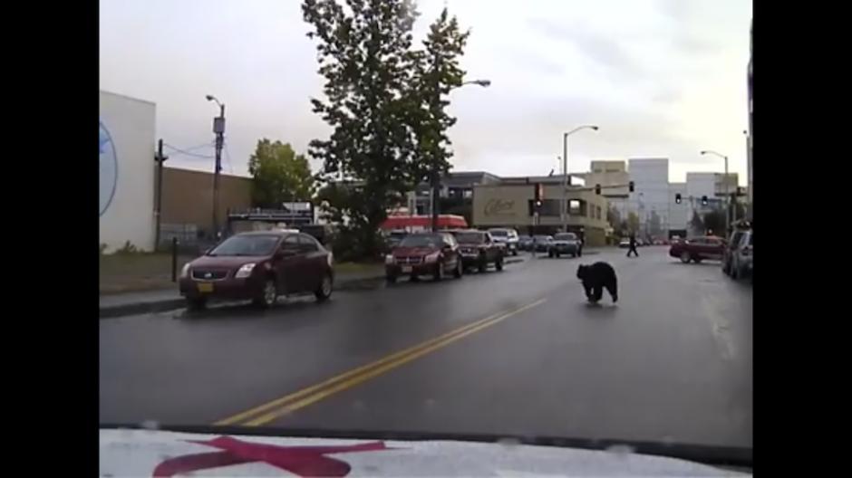 A pesar de que el animal caminaba tranquilamente, los ciudadanos alertaron a los policías de la ciudad. (Foto: Captura de YouTube)