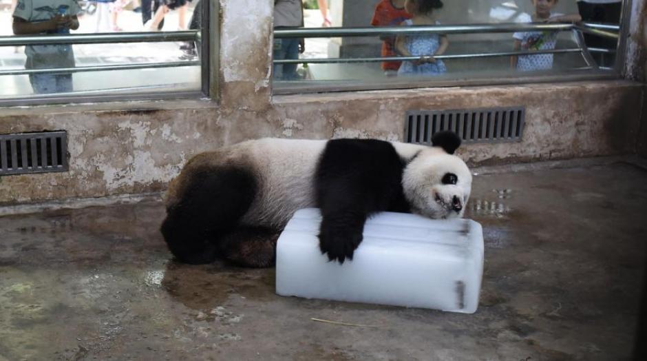 Finalmente lo abraza como si se tratara de su propia cama. (Foto: Facebook CCTV News)