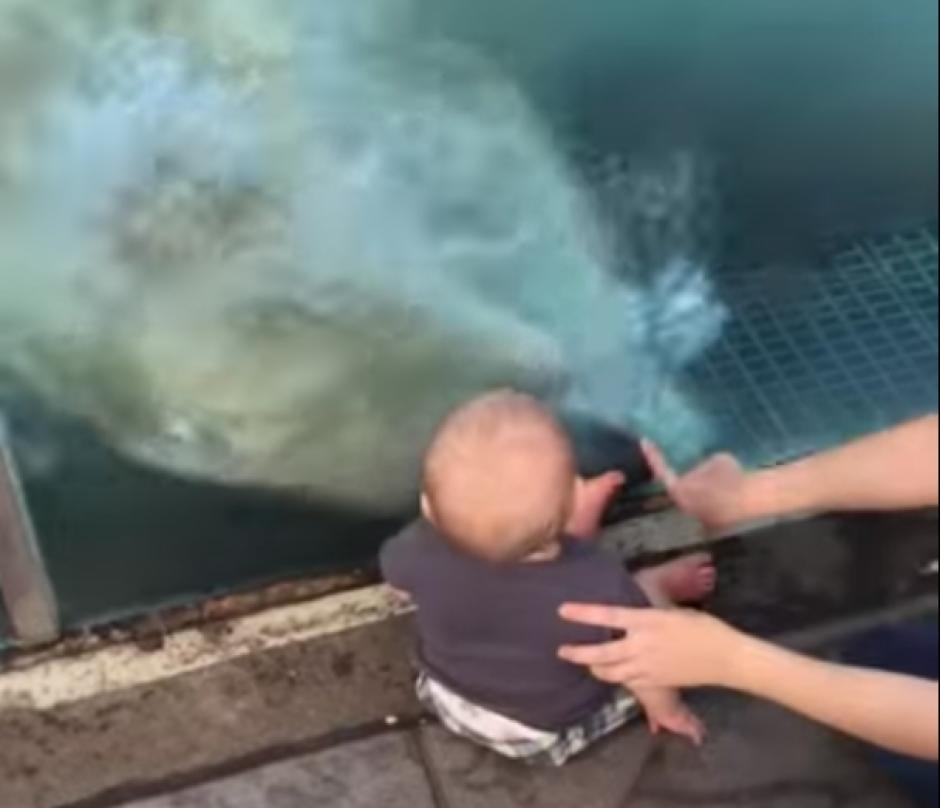 Aparentemente el oso polar juega con el bebé. (Captura de pantalla: Phat Phantom 4/YouTube)
