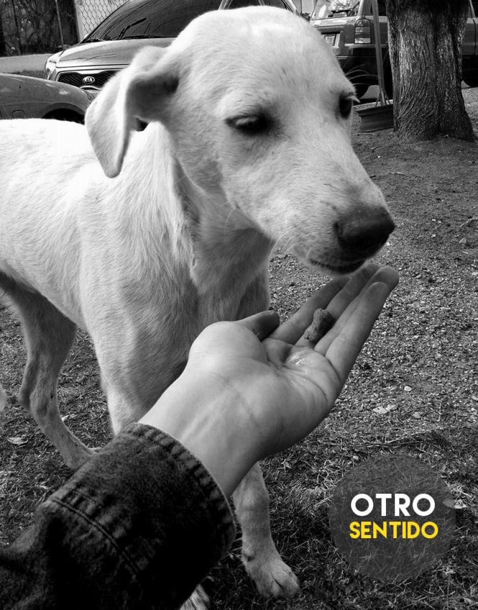 Este perrito fue rescatado de una vida en la calle. (Foto: Otro Sentido)