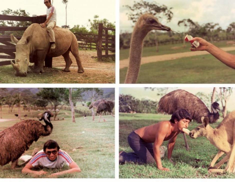 Imágenes de los animales exóticos que habitaban la hacienda Nápoles. (Foto: El Heraldo)
