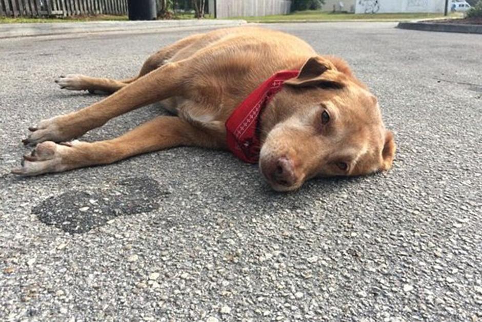 Paco espera a su dueña en el lugar de falleció después de ser atropellada. (Foto: DailyMail)