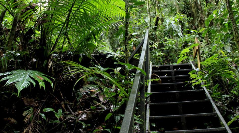 Otro de los parques colombianos donde podrías ser guardabosques es en el Parque Santuario de Flora y Fauna. (Foto: parquesnacionales.gov.co)