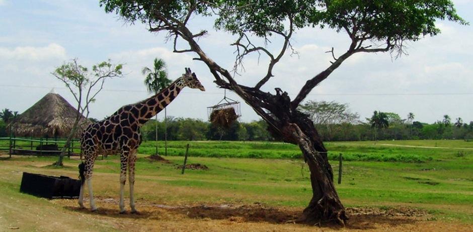 El Yumká, en Villahermosa, Tabasco, México, es una reserva natural dentro de una reserva húmeda natural. (Foto: visitmexico.com)