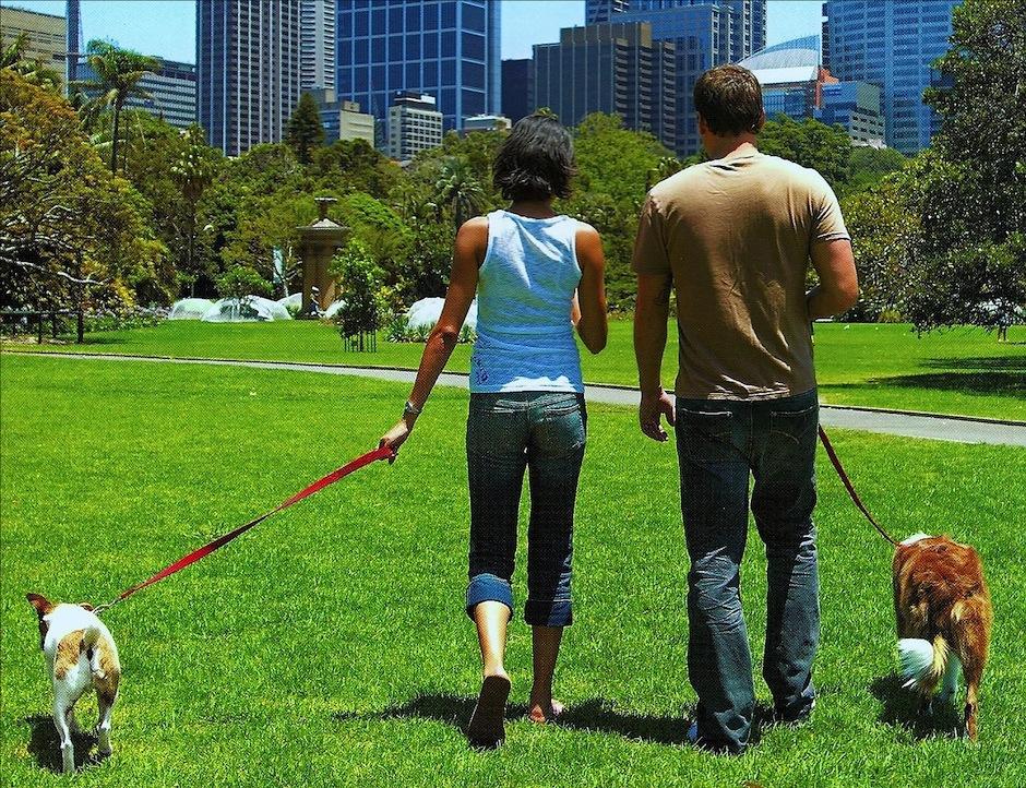 Salir a la calle a disfrutar de la ciudad es otro pasatiempo de los exitosos. (Foto: extraordinarydogs.org)