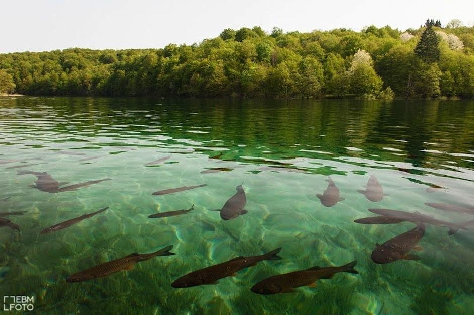 Una pared de hielo con peces se formó en un lago de Dakota del Sur, Estados Unidos. (Foto: ROL Science)