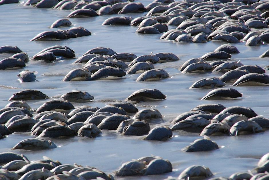 Los peces quedaron a orillas del lago hasta la primavera. (Foto: Kelly Preheim)